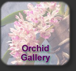 Orchid icon